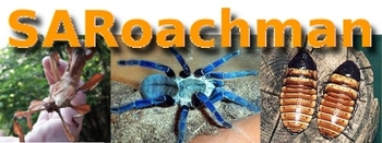 Roaches, tarantulas and stick insects... awesome!